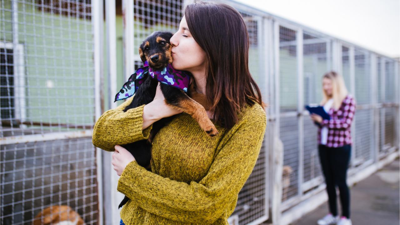 Einer der 30 Dinge, die jeder vor dem 30. Lebensjahr machen sollte, ist es, ein Tier aus dem Tierheim zu adoptieren.